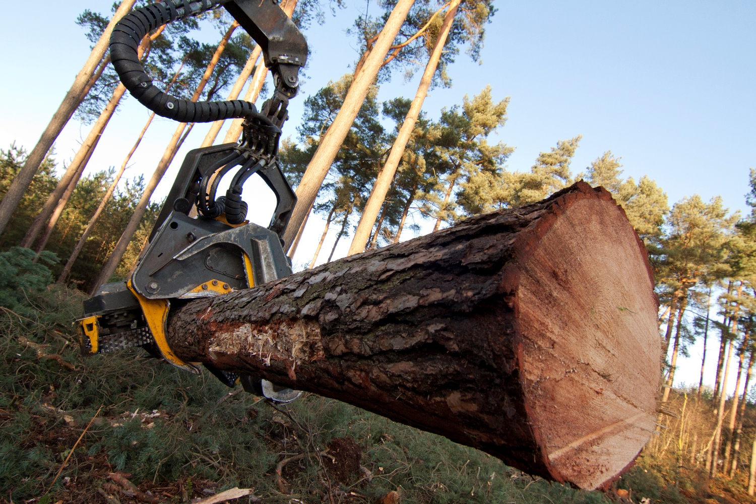 A TRUSTED SERVICE FOR TREE FELLING IN CARDIFF